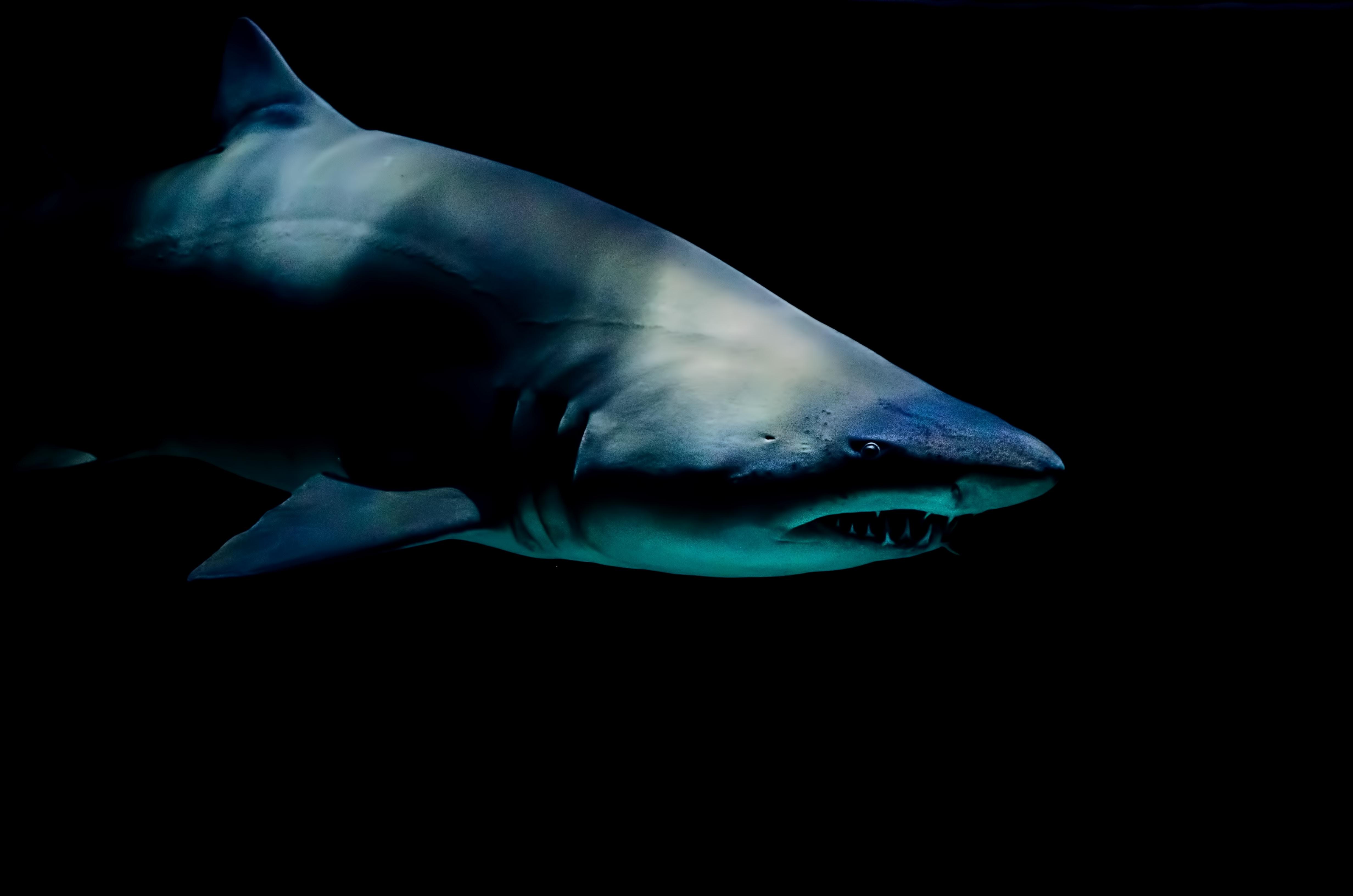 Gefährliche Touristenorte - An diesen Stränden passieren die meisten Haiangriffe